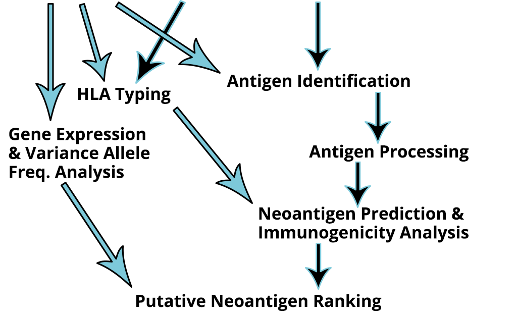 Neoantigen-InfoGraphic_Part2- Neoantigen Identification